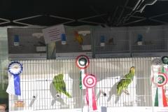 Mostra ornitologica